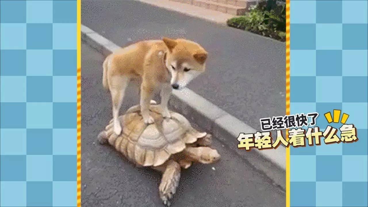word天!蠢萌动物尴尬瞬间!