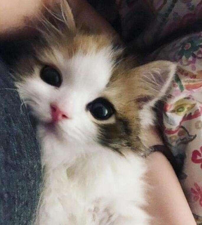敲可爱,你有见过这么粉嫩的小奶猫嘛?