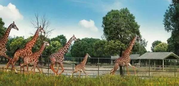 5月19日5折 上海野生动物园:5月19日5折 地址:上海市浦东新区宣桥镇南