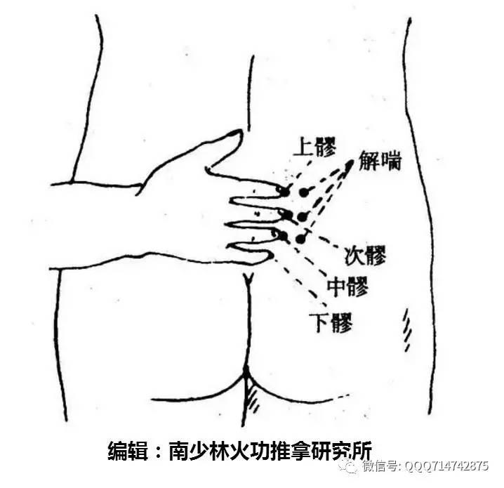 脊柱区浅层手绘图