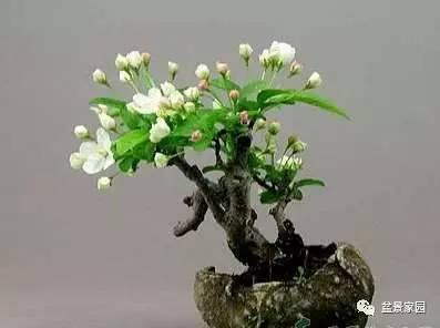 大型观叶植物放在室内什么位置好?