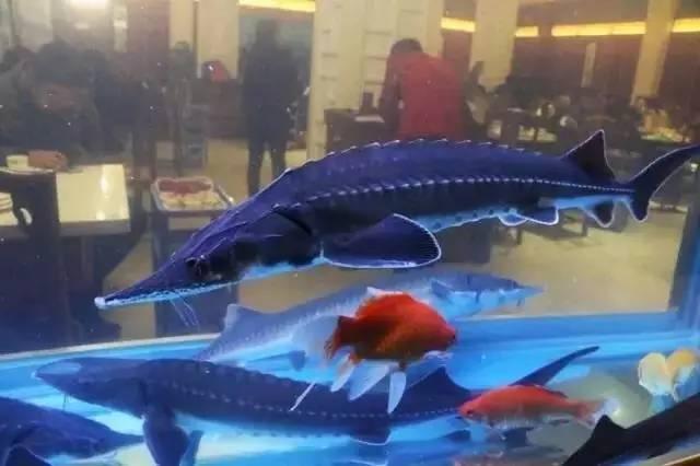 各种鱼的折法步骤图解
