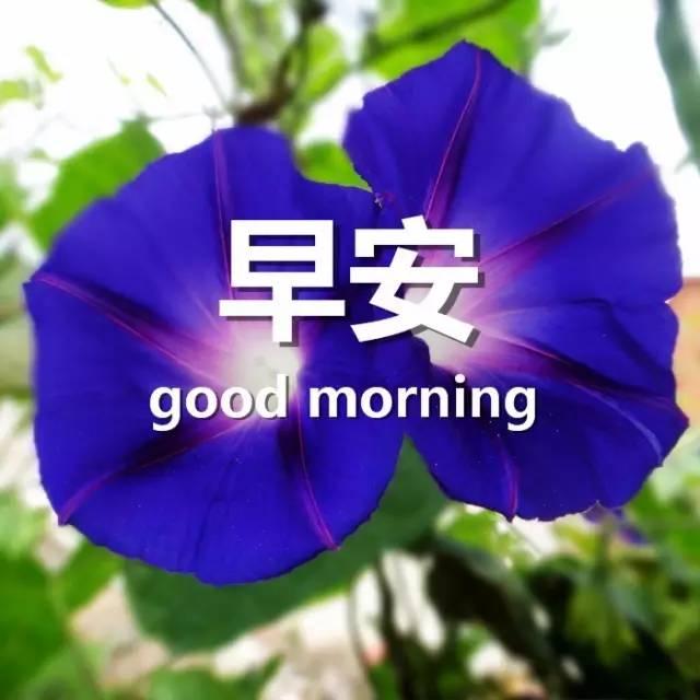 早安问候语每日更新 早上好祝福语