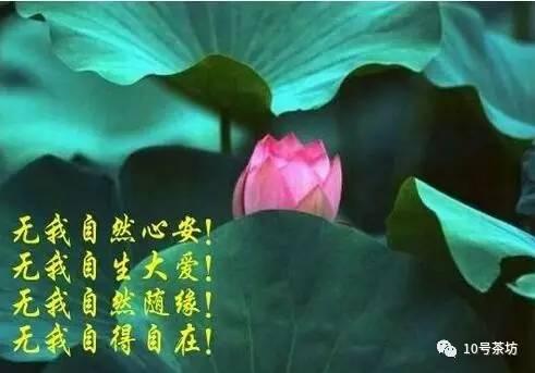 【散文诗】庞燕(四川盐亭)《如果有来生》