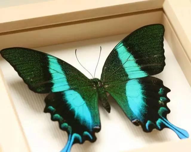 昆虫标本制作活动-儿童节魔法奇幻夜,东风日产邀您与孩子前往神奇