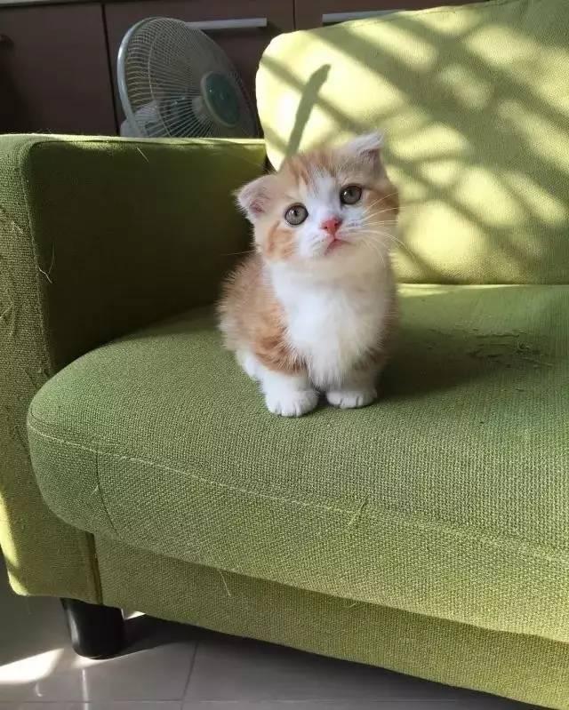 壁纸 动物 猫 猫咪 小猫 桌面 640_799 竖版 竖屏 手机