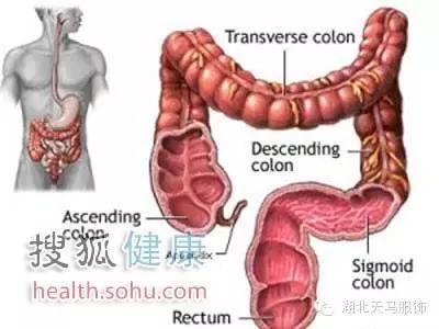 随着年龄的增长,我们的肌肉开始松弛,肠壁的弹性也开始减退,往往容易