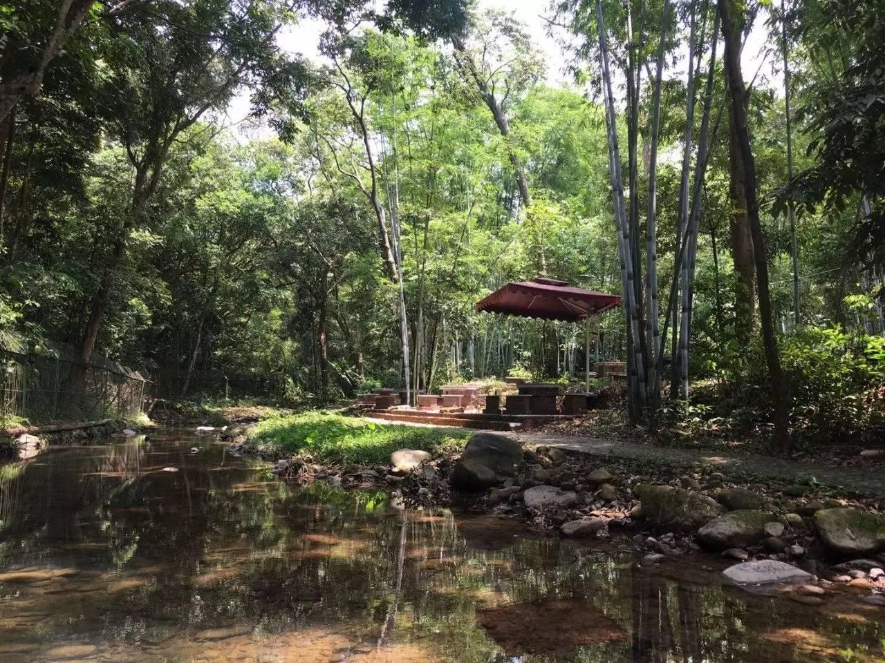 【龙门】南昆山麓下的竹林温泉2天直通车,199元/位,享