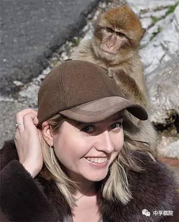 猴子和国际象棋
