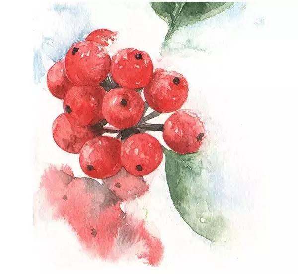 水彩画 《红豆杉