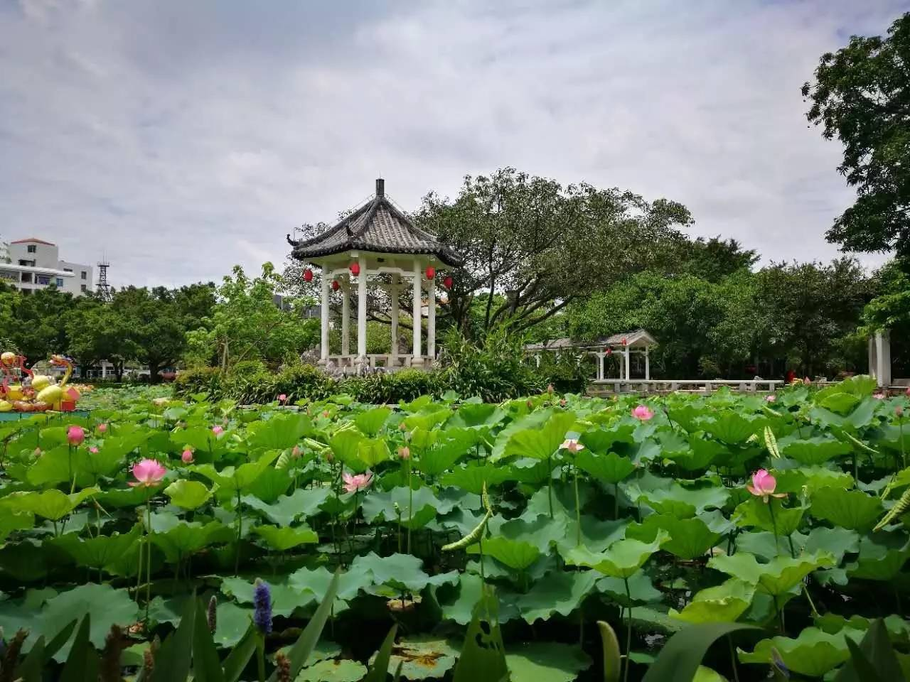 """6000元代金券免费送!东涌镇第二届都市生态农业旅游"""""""