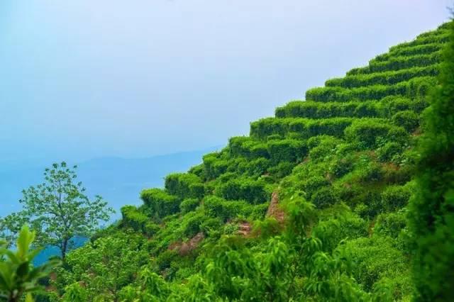 郑州周边山水景点风光正好,不去夏天不完整