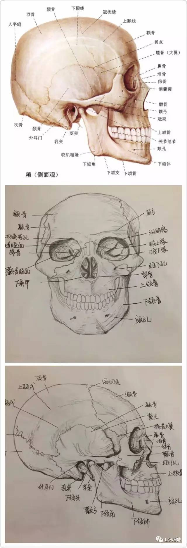 手绘人体解剖图解压!福州这女生