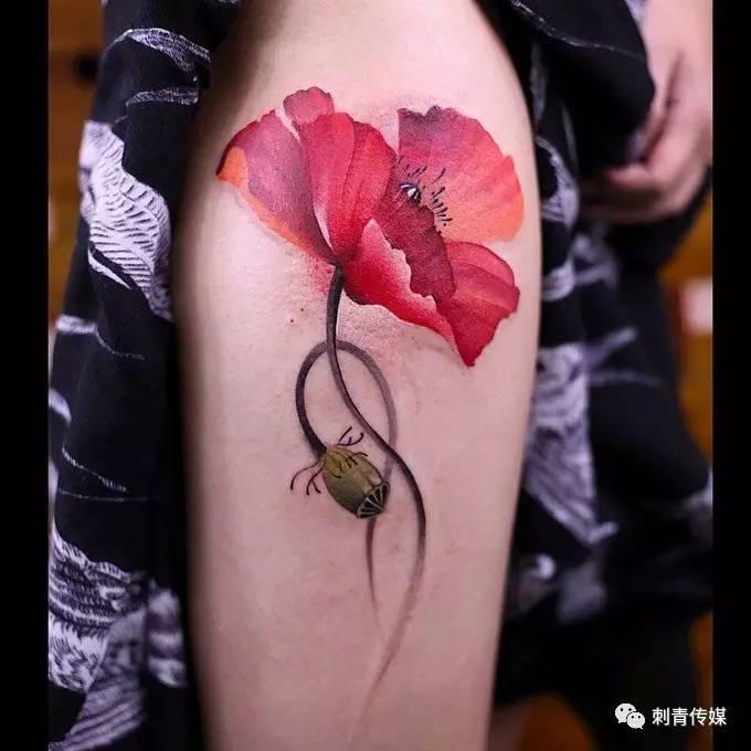 美丽而妖艳的罂粟花