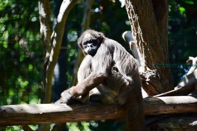 《疯狂动物城》原型:世界第一动物园圣迭戈