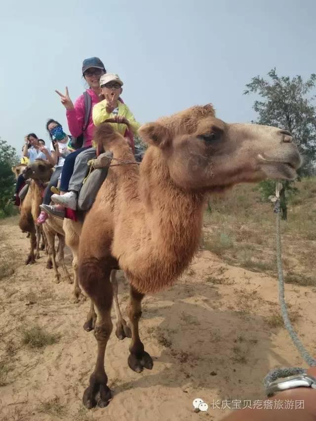 【亲子游】动物园-145元 沙漠疯狂-99元 亲子cs-攀岩