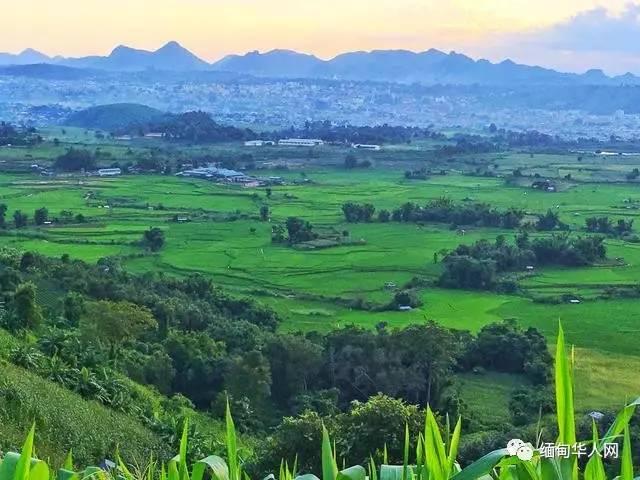 缅甸隐藏了一个美丽梦幻的圣洁之地,腊戌普洱古树茶园地