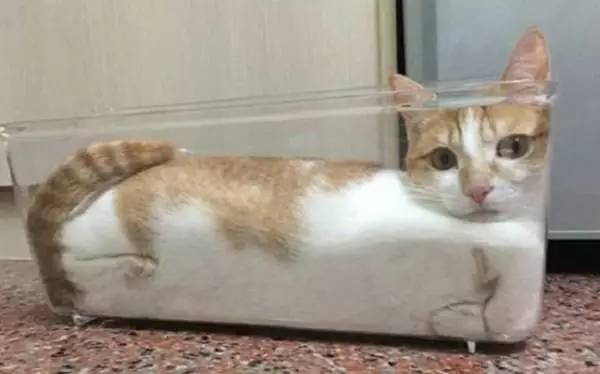 """长见识猫界新品种,液体猫神奇的存在!"""""""