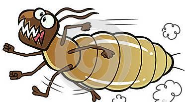 关于白蚁的知识,你必须知道