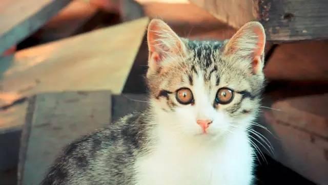 小可爱,守护在各个角落里观察着你在异国他乡时,如同一只猫一样的好奇
