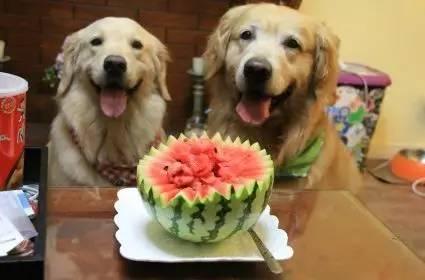 狗狗夏天能吃西瓜么?