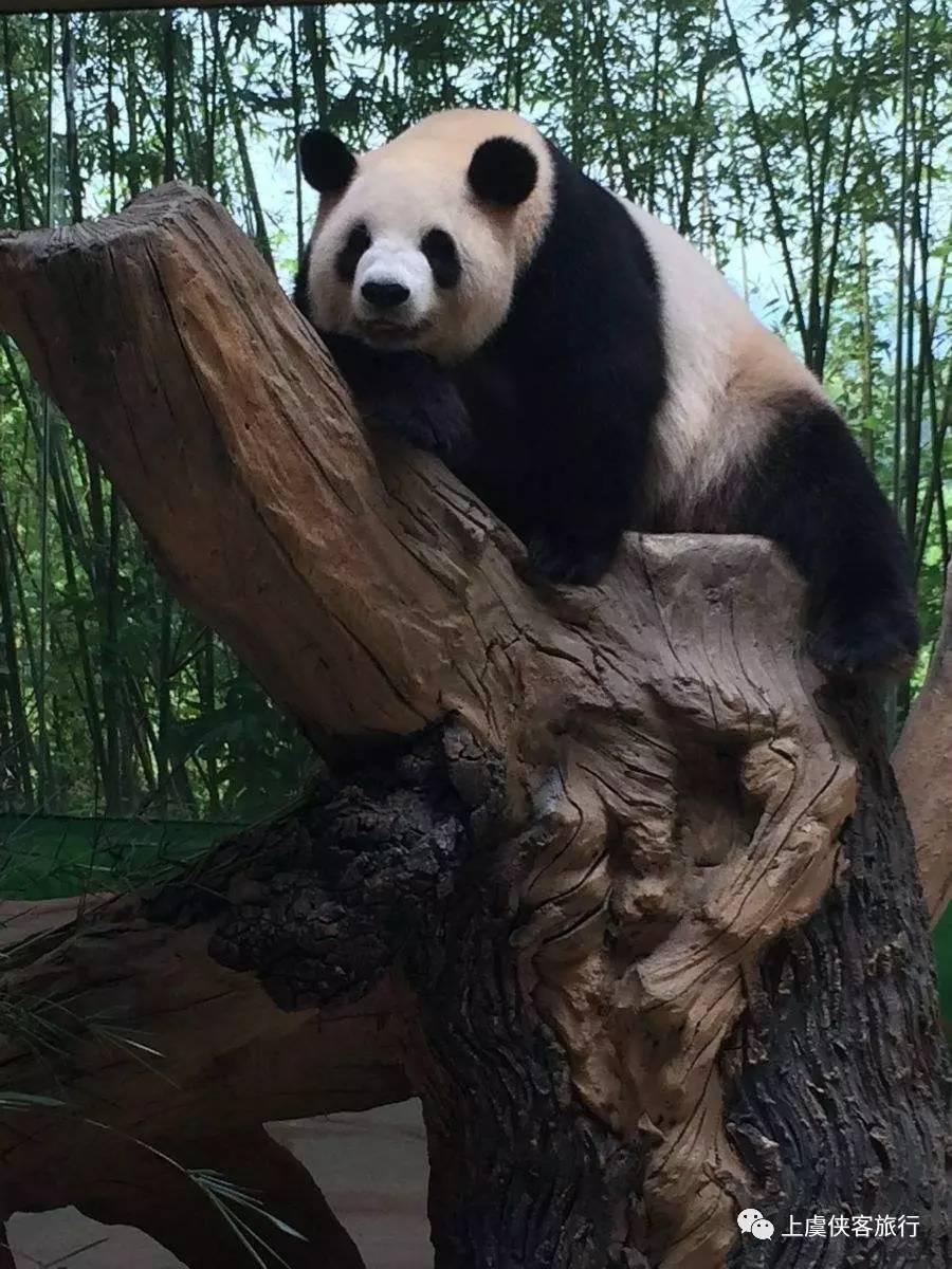【亲子游】5月28/29/30日,杭州野生动物世界--冰雪动物城一日游(成人