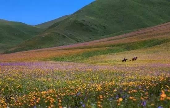新疆有条800公里的风景长廊,初夏美得过分,步步皆天堂!