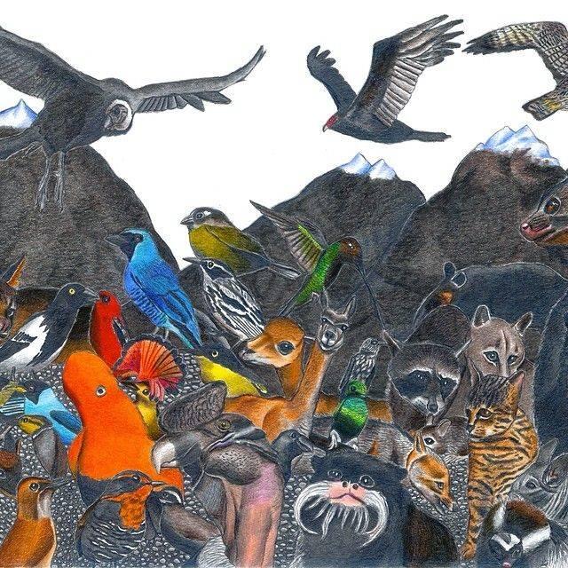每种动物的拉丁文名 下笔之前已经在脑子中形成了图像 凭着自己的想象