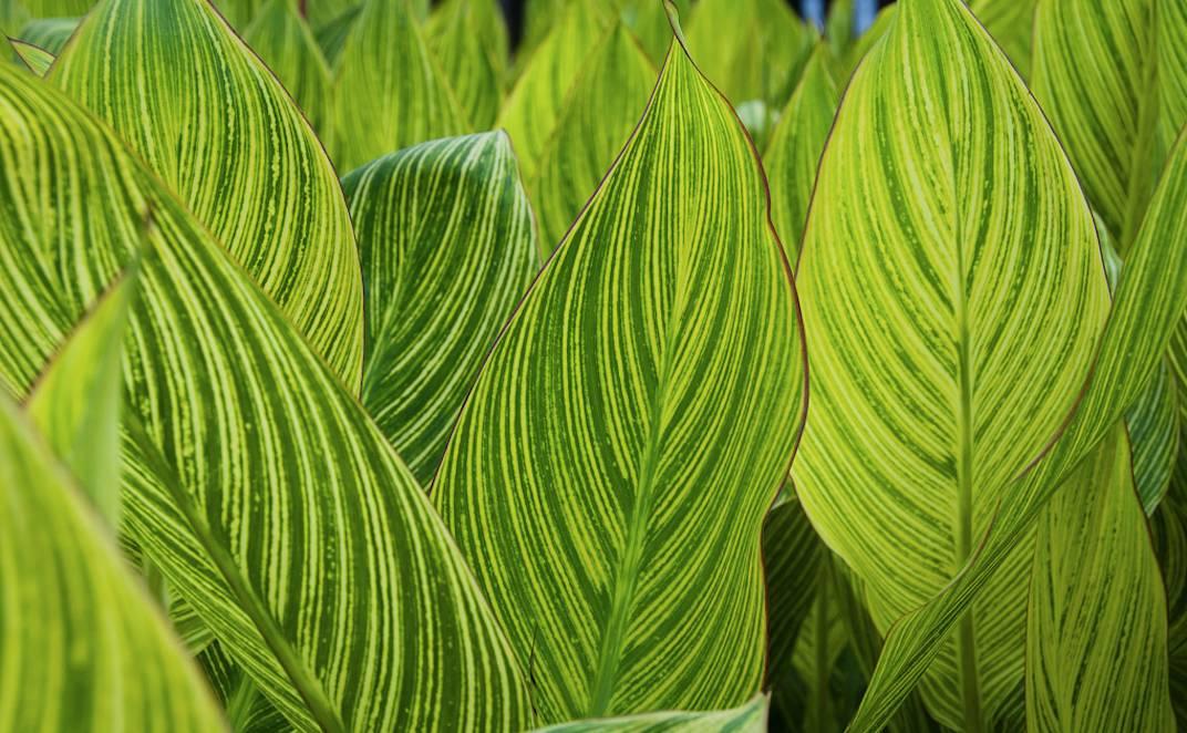 植物肌理圖片手繪圖