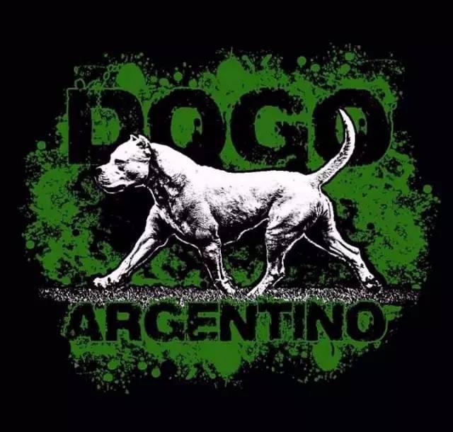 一个完美犬种包含的心血和智慧