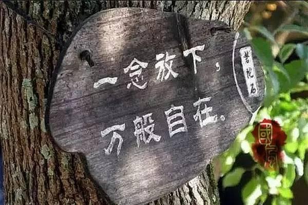 """国风丨 品智生活之修身篇——放下與自在"""""""