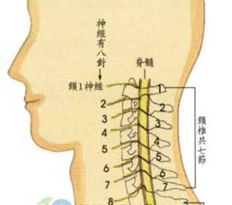 咽喉侧面解剖结构图