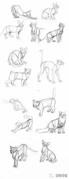 500种动物的绘画参考,这次绝对够爽!