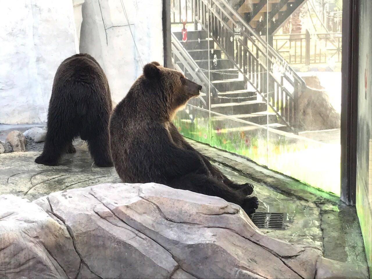 248元【周一】5月29日厦门灵玲国际马戏城 动物观光园