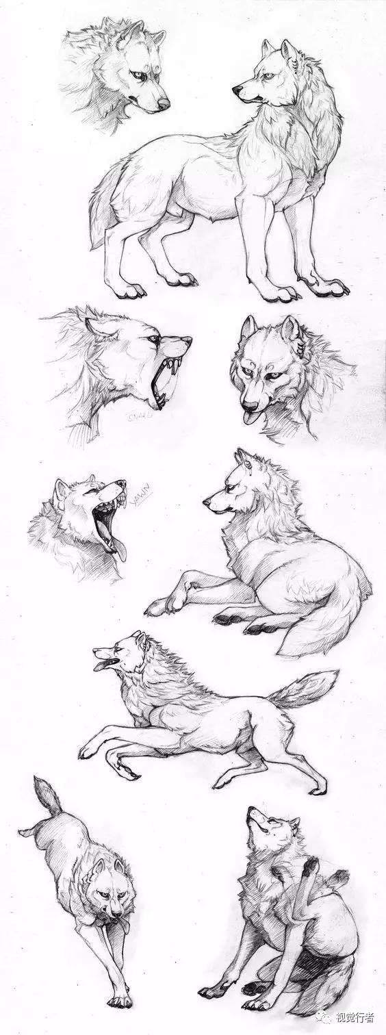 狼宝宝的画法