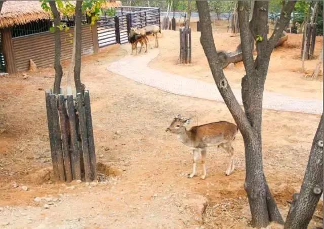旅游 正文  济南野生动物世界位于济南章丘埠村镇,景区占地面积约2200
