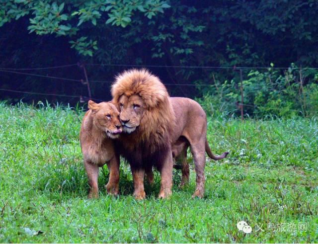 杭州野生动物园家庭游口碑最好的活动