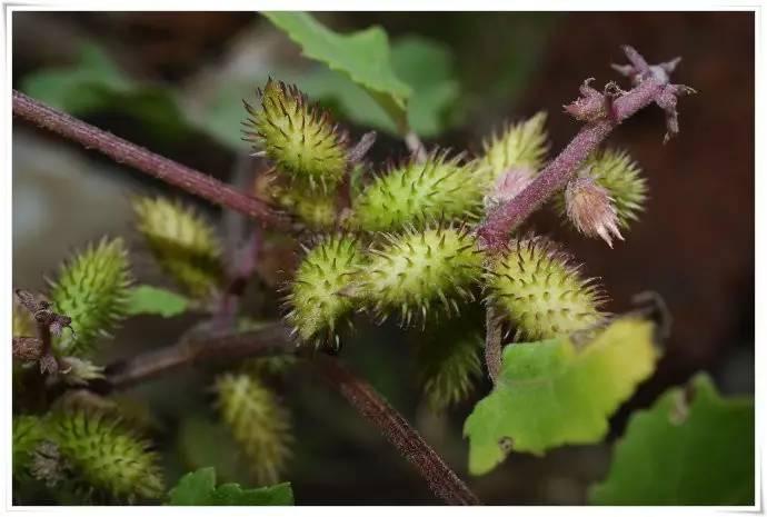 壁纸草花绿色植物红外690_465stm32桌面详解解码图片