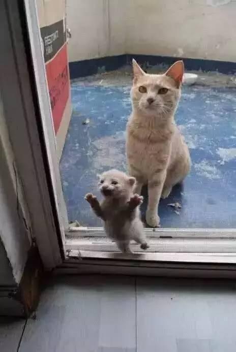 """如果打开门就看到这幅景象,你会怎么做?"""""""