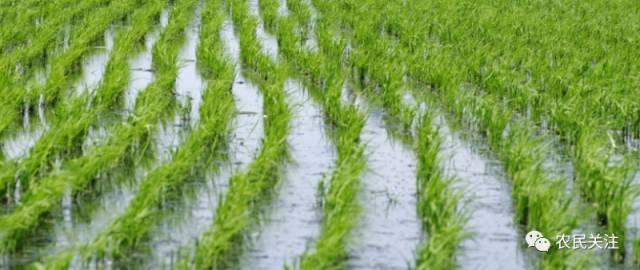 水稻生长过程卡通图片