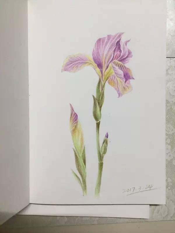 我的植物彩铅手绘记