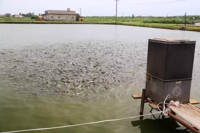 夏季钓鱼找不准水层的人空军是常事