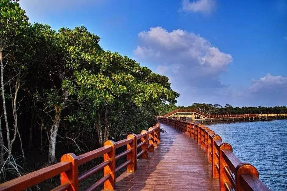 游览红树林湿地公园图片