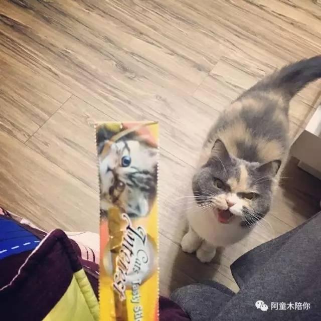 别人家的猫咪都萌萌的很可爱