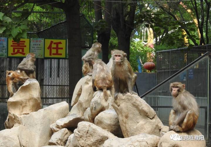 关注  关于网曝濮阳市中心动物园动物生存环境, 濮阳林业在行动