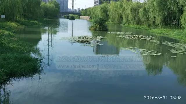 """旅游 正文  十字港河采用 """"食藻虫 水下森林 曝气复氧 生态浮岛 水生"""