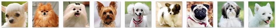 """世界上发毛最华丽的20种宠物!其实""""TA""""就是一只长毛..."""