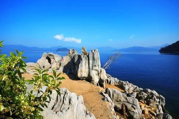 旅游 正文  千岛湖石林位于淳安县石林镇境内,主要由蓝玉坪,玳瑁岭