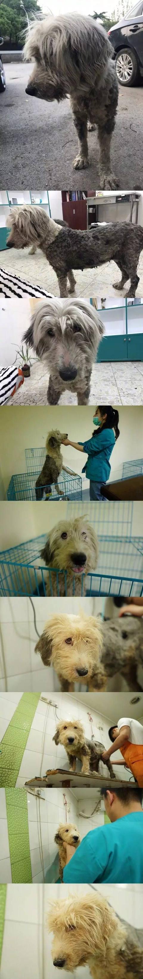 这只流浪狗被救助后,居然笑的这么好看!