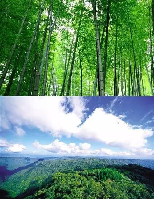 大路树林风景图片